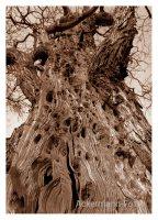 Baumgeschichte