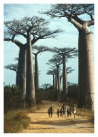 Die Kinder des Baobab