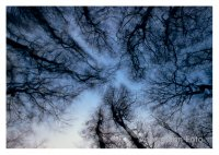 Himmelsbäume